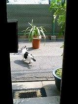 ドアの外にサクラが・・・
