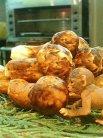 マンキーは松茸がお気に入りの様子。