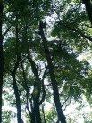 鶴舞公園の木々