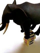 乗った!ゾウが乗った!