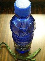 AUSTRIAN MOUNTAIN caffeinated Water