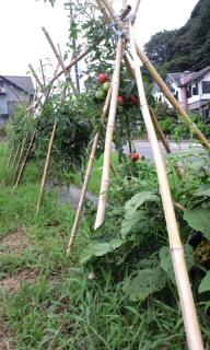 トマト畑0001