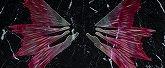 RG デスティニー 光の翼