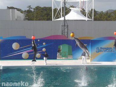 イルカはいるか?