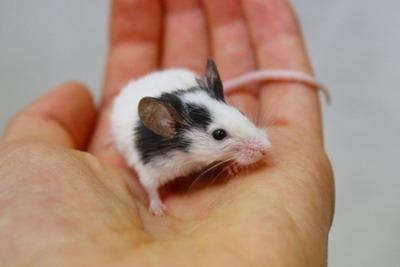 パンダマウス2