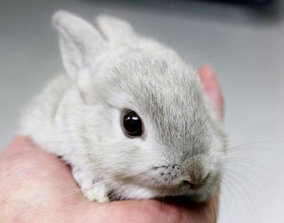 ミニウサギ2 (1)