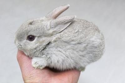 ミニウサギ2 (2)