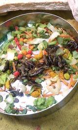 冷凍コオロギと野菜を混ぜて与えています。