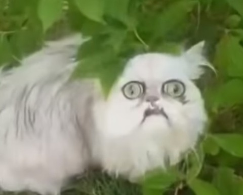 Fuckin cat