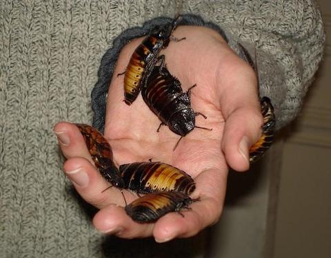 615px-Roachies