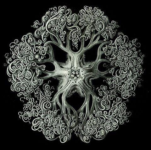 Haeckel_Ophiodea_70_Gorgonocephalidae
