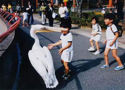 鳥に食われる子供