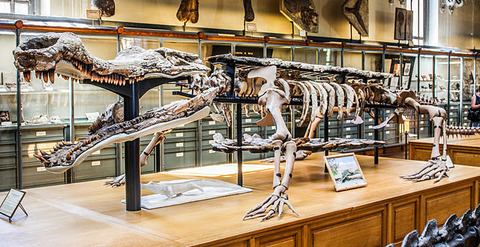 Museum_of_Natural_History_Sarcosuchus