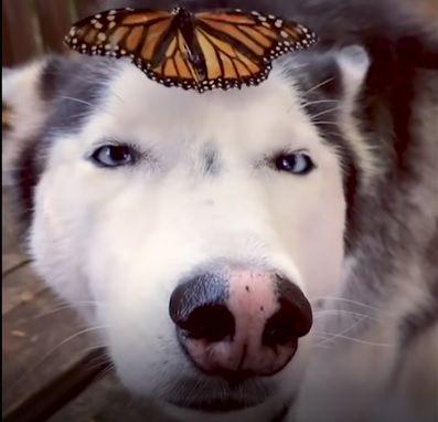 おでこに蝶