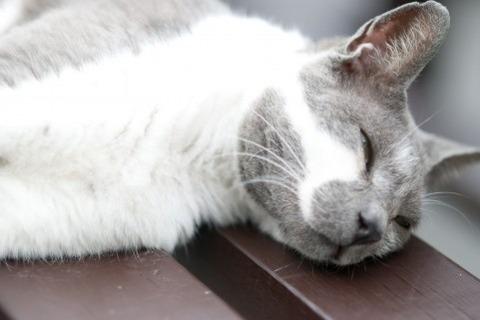 まったり猫2