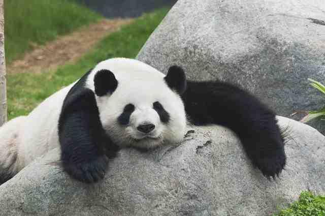 パンダのシンシン 赤ちゃん誕生おめでとう! : ☆いいたいほうだい☆