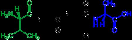 450px-Tetrapeptide_structural_formulae_v.1