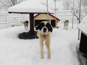 ヨーゼフと雪