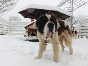ヨーゼフと雪2