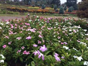 パノラマ花壇1013