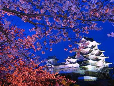 姫路 花見 夜桜会