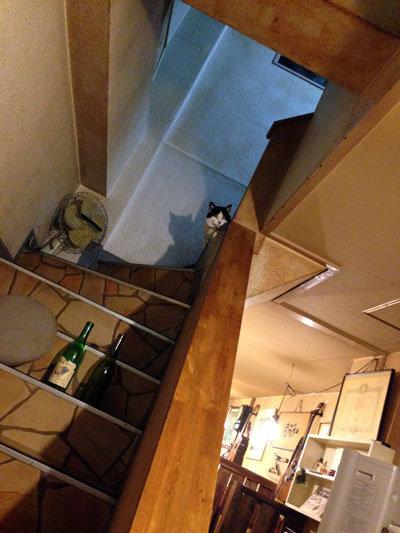 神戸 からあげ 一心 ネコ