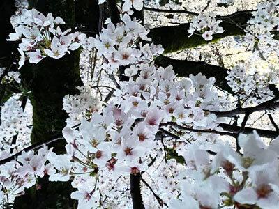 2021 花見 姫路