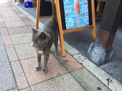 須磨 たんもと商店 猫