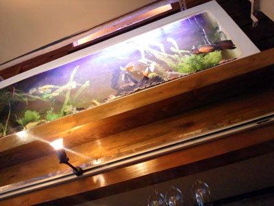 神戸 三ノ宮 GRIL-BAR-MITSU-ミツ 熱帯魚