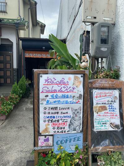 姫路 野里 猫カフェ サロンドケイ