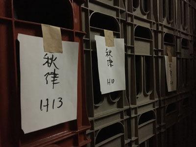 本田商店 龍力 蔵見学 貯蔵庫