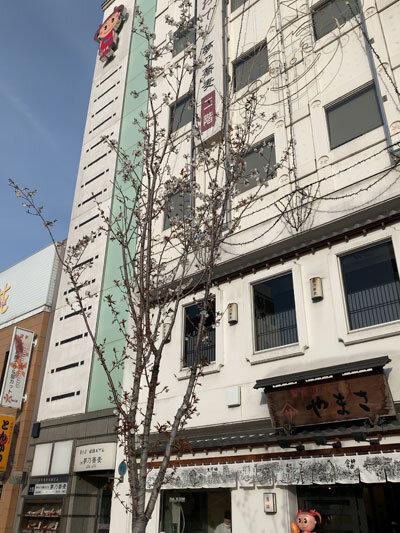 姫路 商店街 桜