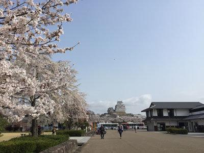姫路城 お花見 2018