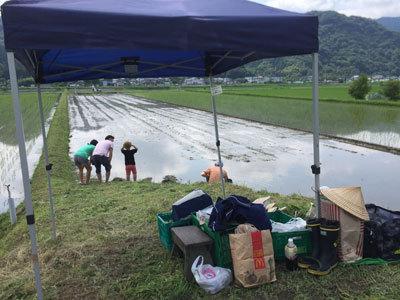 播磨日本酒プロジェクト 酒米の田植え