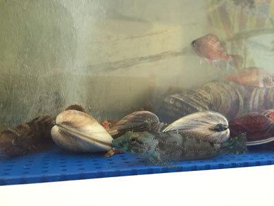 明石 漁師寿司 海蓮丸 生簀