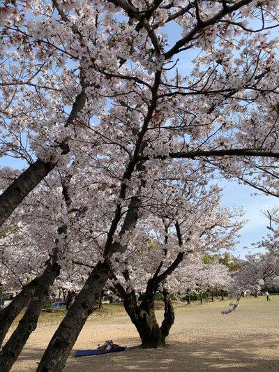 2021 姫路 お花見