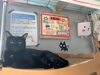 姫路 野里 猫カフェ サロン ド ケイ