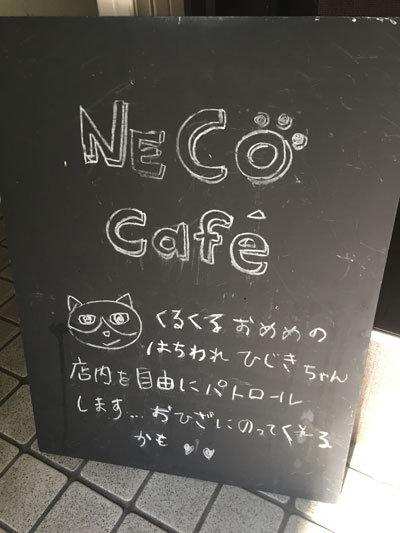 姫路 猫Cafe BUENA VISTA
