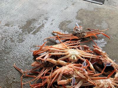 蟹が逃げる