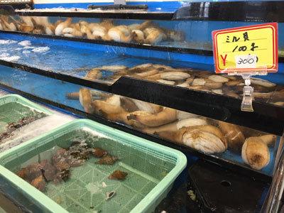 姫路 とれとれ市場 ミル貝