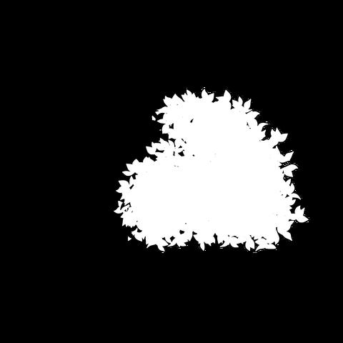 草の塊(葉が丸め)002