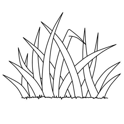 雑草大11