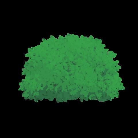 草の塊カラー(葉が丸め)002