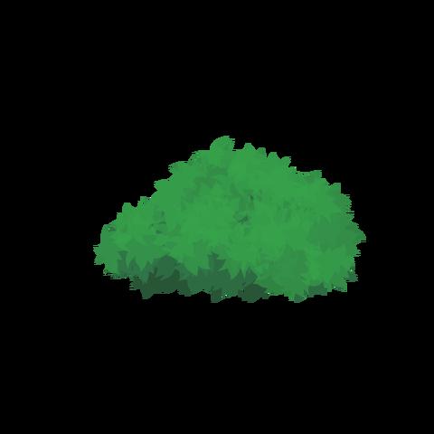 草の塊カラー(葉がトゲトゲ)001
