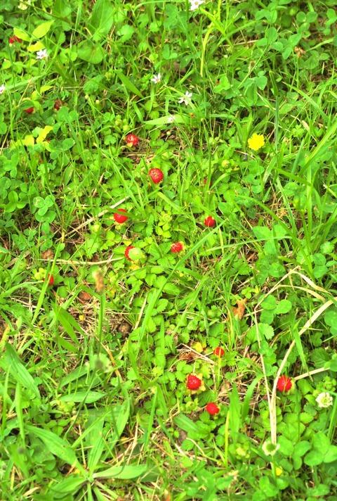 0602蛇苺