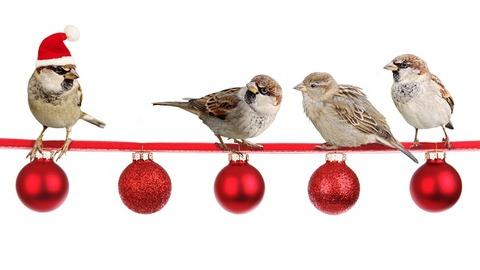 sparrows-2900850_640