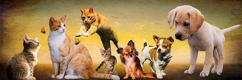 animals-2222007_640