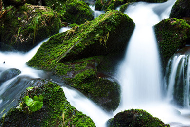 mountain-stream-and-moss-11293796679flB
