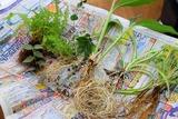 観葉植物 ハイドロカルチャー 種類