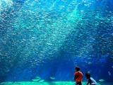 アクアマリンふくしま,水族館